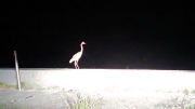 夜の沖ノ島で出会った