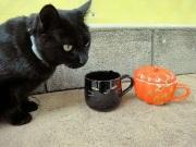 ハロウィンキャット(W黒猫)