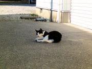 石コロの魅力にハマる猫①