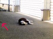 石コロの魅力にハマる猫②
