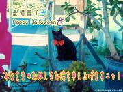 黒猫黒子 Happy Halloween
