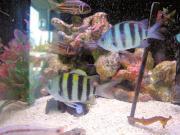 まるへい水族館(mini水槽)