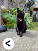 黒猫クロコの「く」