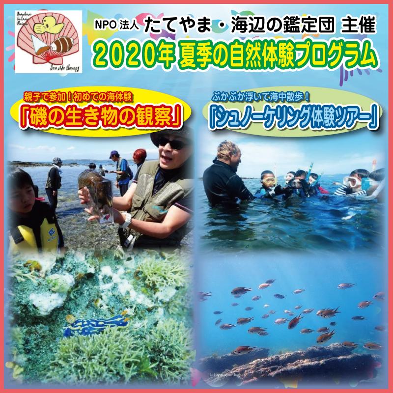 NPO法人 たてやま・海辺の鑑定団(2020年 夏季の自然体験プログラム)